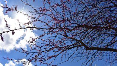 Trees at Vanderbilt