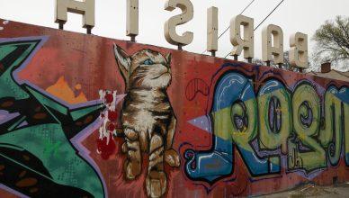 Barista Parlor Cat