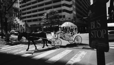 Downtown Horse Carriage