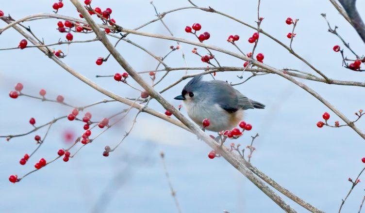 Radnor Lake Bird